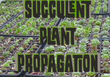 Principles And Practices Of Plant Propagation